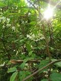 Λίγο πράσινο καθαρό λουλούδι Στοκ Εικόνες