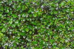 Λίγο πράσινο φύλλο Στοκ εικόνα με δικαίωμα ελεύθερης χρήσης