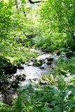 Λίγο ρεύμα που τρέχει μέσω ενός δάσους Στοκ Εικόνες