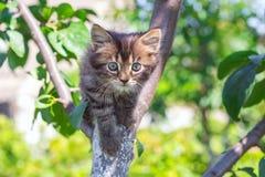 Λίγο ριγωτό γατάκι σε ένα δέντρο σε ένα όμορφο καλοκαίρι day_ Στοκ Εικόνα