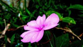 Λίγο ρόδινο όμορφο λουλούδι μόνο στοκ εικόνα με δικαίωμα ελεύθερης χρήσης