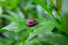 Λίγο σαλιγκάρι στον κήπο μετά από τη βροχή στοκ φωτογραφία με δικαίωμα ελεύθερης χρήσης