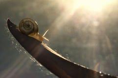 Λίγο σαλιγκάρι στο φύλλο Στοκ εικόνες με δικαίωμα ελεύθερης χρήσης