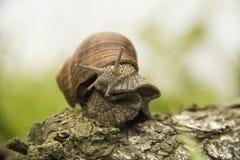 Λίγο σαλιγκάρι που σέρνεται σε ένα δέντρο σε ένα πράσινο υπόβαθρο Στοκ Εικόνες