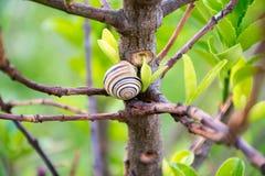 Λίγο σαλιγκάρι στο δέντρο Στοκ φωτογραφία με δικαίωμα ελεύθερης χρήσης