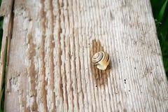 Λίγο σαλιγκάρι στο ξύλο Στοκ φωτογραφίες με δικαίωμα ελεύθερης χρήσης