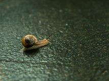 Λίγο σαλιγκάρι στο δρόμο μετά από τη βροχή Στοκ Εικόνες