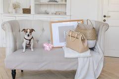 Λίγο σκυλάκι στον καναπέ με μια αναδρομική βαλίτσα Στοκ φωτογραφίες με δικαίωμα ελεύθερης χρήσης