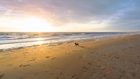Λίγο σκυλί watchng τα κύματα στη Βόρεια Θάλασσα στοκ εικόνα με δικαίωμα ελεύθερης χρήσης