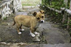 Λίγο σκυλί που εξετάζει τη κάμερα Στοκ Εικόνα