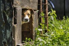 Λίγο σκυλί σε ένα σκυλόσπιτο Στοκ Φωτογραφίες