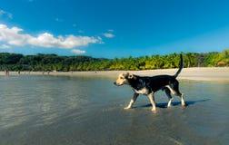 Λίγο σκυλί στην παραλία Στοκ φωτογραφίες με δικαίωμα ελεύθερης χρήσης