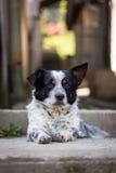 Λίγο σκυλί Στοκ εικόνες με δικαίωμα ελεύθερης χρήσης