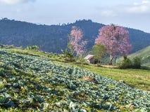 Λίγο σπίτι με τα ρόδινα δέντρα sakura Στοκ Εικόνα