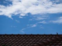 Λίγο σπουργίτι στη μεγάλη στέγη Στοκ Φωτογραφία