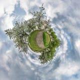Λίγο σφαιρικό πανόραμα πλανητών 360 βαθμοί Σφαιρική εναέρια άποψη στον ανθίζοντας οπωρώνα κήπων μήλων με τις πικραλίδες Κυρτότητα απεικόνιση αποθεμάτων
