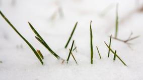 Λίγο της πράσινης χλόης στο χιόνι ερχόμενη άνοιξη Στοκ εικόνες με δικαίωμα ελεύθερης χρήσης