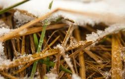 Λίγο της πράσινης χλόης στο χιόνι ερχόμενη άνοιξη Στοκ Εικόνα