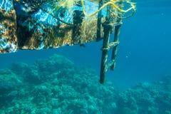 Λίγο τροπικό ψάρι που ζει κάτω από τον πάκτωνα στη θάλασσα Στοκ Φωτογραφία
