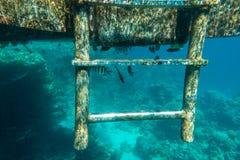 Λίγο τροπικό ψάρι που ζει κάτω από τον πάκτωνα στη θάλασσα Στοκ φωτογραφία με δικαίωμα ελεύθερης χρήσης