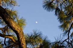Λίγο φεγγάρι στοκ εικόνα με δικαίωμα ελεύθερης χρήσης