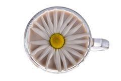 Λίγο φλυτζάνι γυαλιού με το κακάο και τομέας chamomile στοκ φωτογραφίες