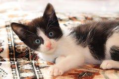 Λίγο φοβησμένο γατάκι στοκ εικόνα