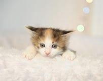 Λίγο χαριτωμένο γατάκι που κρυφοκοιτάζει από μια άσπρη χνουδωτή καρέκλα abstract background backgrounds blurr blurred bright brig Στοκ Εικόνες
