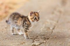 Λίγο χαριτωμένο ζώο κατοικίδιων ζώων γατών γατακιών γατακιών Στοκ εικόνα με δικαίωμα ελεύθερης χρήσης
