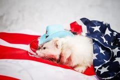 Λίγο χαριτωμένο κουνάβι στις ΗΠΑ σημαιοστολίζει Στοκ Φωτογραφία