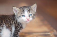 Λίγο χαριτωμένο πορτρέτο γατακιών Στοκ Εικόνες