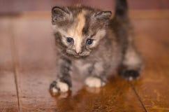 Λίγο χαριτωμένο πορτρέτο γατακιών Στοκ Φωτογραφίες
