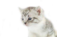 Λίγο χαριτωμένο πορτρέτο γατακιών Στοκ Εικόνα