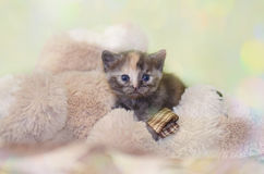 Λίγο χαριτωμένο πορτρέτο γατακιών Στοκ εικόνα με δικαίωμα ελεύθερης χρήσης