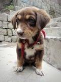 Λίγο χαριτωμένο σκυλί κουταβιών με τα κουδούνια στα σκαλοπάτια στοκ φωτογραφίες