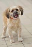 Λίγο χαριτωμένο σκυλί Στοκ φωτογραφία με δικαίωμα ελεύθερης χρήσης
