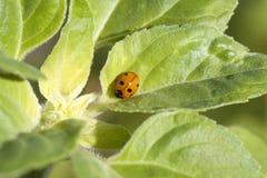 Λίγο χαριτωμένο ladybug Στοκ εικόνες με δικαίωμα ελεύθερης χρήσης
