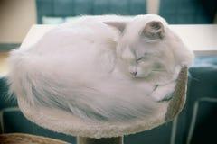 Λίγο χιονώδης γάτα Στοκ Εικόνες