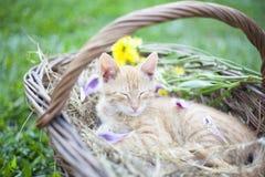 Λίγο ψάθινο καλάθι γατών sleepingin Στοκ εικόνα με δικαίωμα ελεύθερης χρήσης