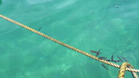 Λίγο ψάρι στη θάλασσα φιλμ μικρού μήκους