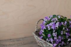 Λίγο bellflower στο γκρίζο ψάθινο καλάθι Μυστήρια διάθεση άνοιξη Στοκ εικόνα με δικαίωμα ελεύθερης χρήσης