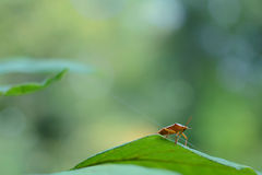 Λίγο bug& x27 μεγάλος κόσμος του s στοκ εικόνες