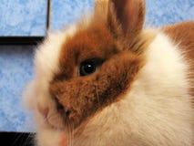 Λίγο Bunny στοκ φωτογραφίες