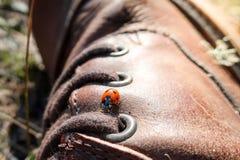 Λίγο ladybug/περίπατοι λαμπριτσών σε μια καφετιά μπότα δέρματος Στοκ Φωτογραφίες