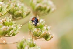 Λίγο ladybug σε εγκαταστάσεις Στοκ φωτογραφία με δικαίωμα ελεύθερης χρήσης