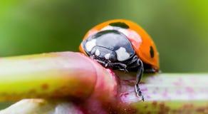 Λίγο ladybug σε εγκαταστάσεις Στοκ Φωτογραφία