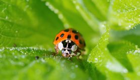 Λίγο ladybug σε εγκαταστάσεις Στοκ φωτογραφίες με δικαίωμα ελεύθερης χρήσης