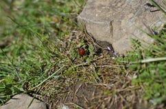 Λίγο ladybug στο ίχνος πεζοπορίας Στοκ φωτογραφία με δικαίωμα ελεύθερης χρήσης