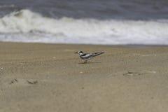 Λίγο seagull Στοκ εικόνα με δικαίωμα ελεύθερης χρήσης