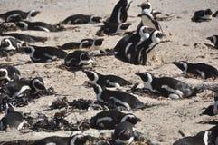 λίθοι penguins Στοκ φωτογραφίες με δικαίωμα ελεύθερης χρήσης